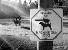 Machine Gun Dog!!