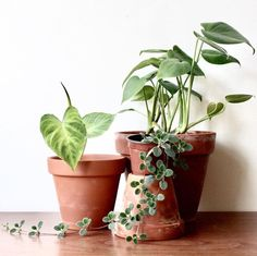 house plant cuties