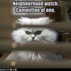 This is so my baby bourke watching out for the creepers in the neighborhood!