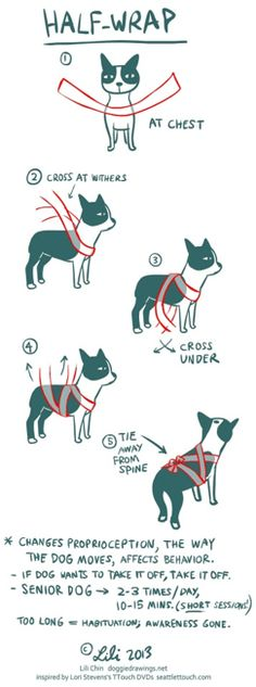 anxiety wrap a dog dog-obedience-training and dog-tricks-training Thunder Shirt For Dogs, Dog Wrap, Training Your Dog, Training Tips, Training Online, Training Videos, Potty Training, Dog Anxiety, Anxiety Tips