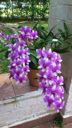 beautiful flowers greeting for tuesday Unusual Flowers, Beautiful Flowers Garden, Types Of Flowers, Amazing Flowers, Pretty Flowers, Purple And White Flowers, Purple Orchids, Dendrobium Orchids, Yellow Roses