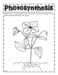 What Do Plants Make Worksheet Worksheets