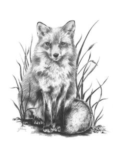 Items similar to Charcoal Fox Drawing - Archival Art Print - - Lindsay Johnson - Attentive on Etsy Pencil Drawings Of Animals, Animal Sketches, Art Sketches, Fox Drawing, Painting & Drawing, Realistic Drawings, Easy Drawings, Fox Tattoo Design, Fuchs Tattoo