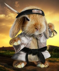Bunny Warrior....he knows Bun Fu?
