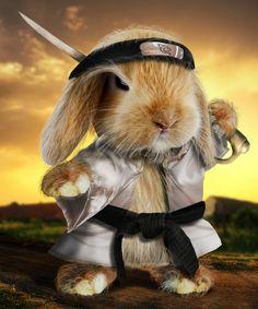 Bunny Warrior....he knows Bun Fu?