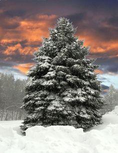 ✯ Winter Wonderland