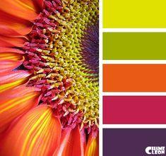 Color Inspiration  CHAMELEON. Color Palette.