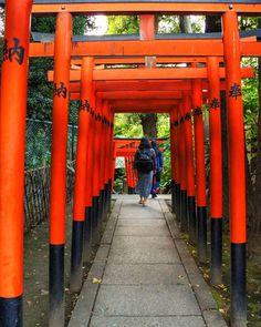 Hidden Vermillion gates inside Ueno park. #ueno #instagram#japanlife#shibuyacrossing#japannow #tower#vermillion #gates#shrine #shinto#ilovejapan #instagram #visitjapan#tokyo#japan#spiritual#tranquil#hdrjapan#hdr#instagood#love#goodvibes #alma#buenovista#japon by paradoxicalphotography