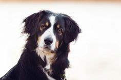 © Bouncing Light Photography. Cute border collie mix.