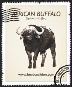 National Animal, Rhinos, African Elephant, Conservation, Bead, Amp, Activities, Facebook, Website