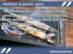 Pacific saury nutrition