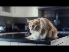 Hilarious commercial from O2!