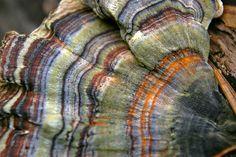 #mushrooms #fungi