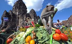Monkey Buffet, Lpburi province, Thailand
