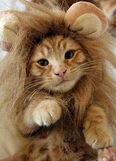 No es tan fiero el león como lo pintan