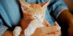 kattförsäkring jämför katt