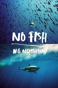 - No Fish No Future -  does no one understand that overfishing has gone so far the fish we are catching are smaller and smaller because we've caught most all the larger and soon we will have nothing to catch meaning nothing in the ocean will have anything. There will be nothing left!