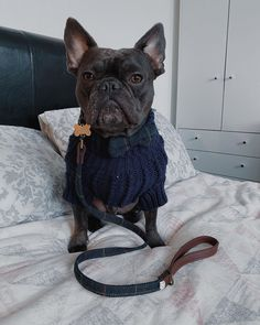 "Océan Johnson on Instagram: ""This is my smart outfit😏 • Jumper: @parklanepup -  #frenchie #frenchbulldog #frenchiesofinstagram #wainwrights #bulldoglife #frenchie1…"" Smart Outfit, French Bulldog, Jumper, My Photos, Ocean, Dogs, Animals, Outfits, Instagram"