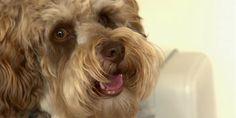 #De plus en plus de chiens drogués à la marijuana au Nouveau Brunswick - Le Huffington Post Quebec: Le Huffington Post Quebec De plus en…