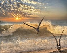 Take off at sunset beach! Beautiful Sunset, Beautiful Places, Beautiful Birds, Planets In The Sky, Rio, I Love The Beach, Sea Waves, Am Meer, Waterfalls