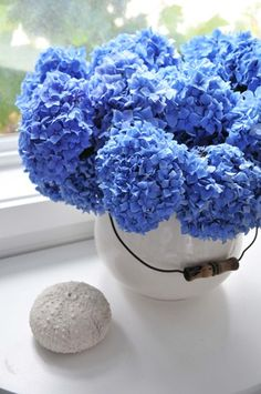 my favorite flowers in the world-blue hydrangeas