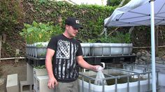 Cool explanatory vid of kickstarting a aquaponics system