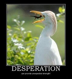 desperation pets