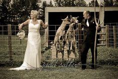 Aamodt's Apple Farm Wedding!