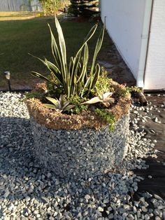 Got an old dryer drum laying around? This reader transformed one into a planter! --> http://www.hgtvgardens.com/photos/re-purposed-planter-0000013d-c235-dffd-afbf-def518270000?soc=pinterest