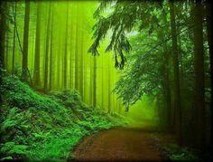 Beautiful world, beautiful places, beautiful forest, amazing places, shades of green Beautiful World, Beautiful Places, Beautiful Pictures, Amazing Places, Beautiful Forest, All Nature, Amazing Nature, Nature Tree, Green Nature