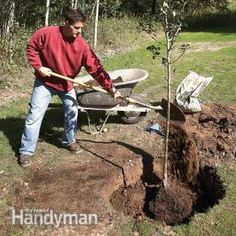 Installation: Tips for Trouble-Free Tree Planting Here are 10 tips for planting and caring for a new tree so you can enjoy it for years to come.Here are 10 tips for planting and caring for a new tree so you can enjoy it for years to come. Garden Shrubs, Garden Trees, Lawn And Garden, Garden Landscaping, Landscaping Ideas, Trees And Shrubs, Trees To Plant, Tree Planting, Tree Care