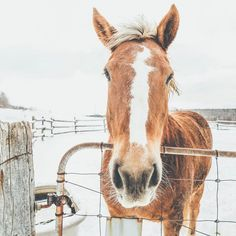 """2,427 Likes, 41 Comments - Toronto, Canada (@hollysisson) on Instagram: """"Hello!  #Stirling #Ontario #VSCOcam #horse ~ Canon 5D MkIII + 24–70 f2.8L II @ 24mm 