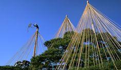 "Yukitsuri ""Snow-hanging"" rope structures are installed before the winter hits in Kenrokuen Garden, Kanazawa, Japan."