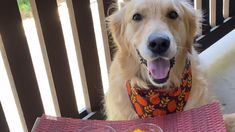 Which one is better? Canned or Homemade Dog Pumpkin Puree Dog Pumpkin, Pumpkin Dog Treats, Pumpkin Puree, Can Dogs Eat, Dog Eating, Homemade Dog, Animals, Animales, Animaux
