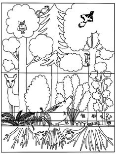 Lebensraum Wald: Stockwerke Archive - Blog | Bildung leben mit innovativem Unterrichtsmaterial Cool Pictures, Beautiful Pictures, Woodland Party, Holiday Cocktails, Science, Eat Cake, Blog, School, Live