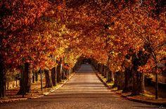 Cores de Outono #discovervidago