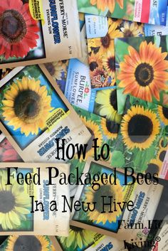 How to Feed Packaged Bees