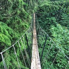 This Boardwalk Trail Is Suspended High In The Canopy Of A Forest In Ontario is part of Ontario travel - It's the longest of its kind in the world Ontario Travel, Toronto Travel, Ontario Oregon, Ontario Parks, Places To Travel, Places To Go, Travel Destinations, Hiking Spots, Hiking Trails