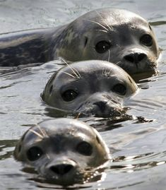 Three seals.