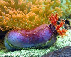 Nudibrânquio. Os nudibrânquios constituem uma subordem de moluscos gastrópodes marinhos pertencentes à ordem dos opistobrânquios, na qual se encontram, por exemplo, as lesmas-do-mar. Tais animais possuem as brânquias desprotegidas, fato que legitima seu nome.  http://www.mundogump.com.br/top-seres-coloridos/