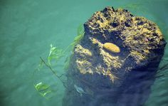 Water Rock  by Chris Jaeger