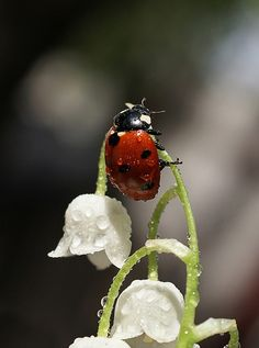 Ladybug. Up close and personal.