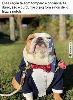 Excited to share this item from my shop: Navy blue dog tuxedo with burgundy bow tie Dog wedding attire Formal dog suit Swallow-tailed dog coat Birthday dog costume Bespoke suit Dog Wedding Attire, Wedding Men, Wedding Suits, Wedding Ideas, Dog Wedding Dress, Civil Wedding, Fall Wedding, Burgundy Bow Tie, Burgundy Wedding