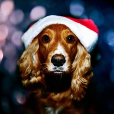 This dog and I are getting the Christmas itch already....