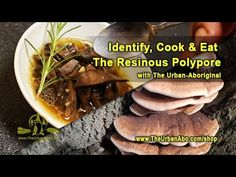 Identify, Cook & Eat the Resinous Polypore w/ The Urban-Aboriginal Aboriginal Food, Stuffed Mushrooms, Beef, Urban, Cooking, Stuff Mushrooms, Meat, Kitchen, Brewing