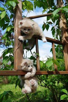 naughty cats ;)