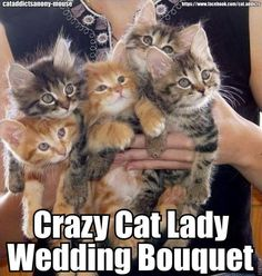 Crazy Cat Lady Bouquet... @Elaina Kathryn Ross