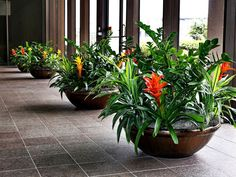 interior plantscape Why not let Green Design help you achieve a look that will 'WOW