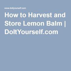 How to Harvest and Store Lemon Balm   DoItYourself.com