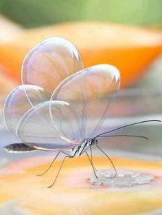 Beautiful Butterfly Bubble Wings - Most Beautiful Pictures